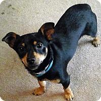 Adopt A Pet :: Freedom - Oakley, CA