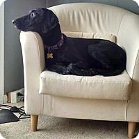 Adopt A Pet :: Lusa - Salt Lake City, UT