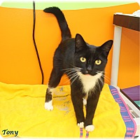Adopt A Pet :: Tony - Welland, ON