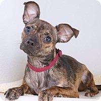 Adopt A Pet :: Melanie - Sudbury, MA