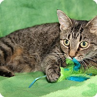 Adopt A Pet :: Willow (Spayed) - Marietta, OH