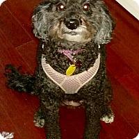 Adopt A Pet :: Zoey - Weeki Wachee, FL