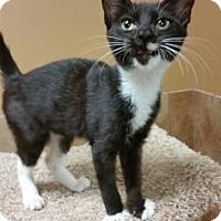 Adopt A Pet :: Fiona (foster care) - Philadelphia, PA