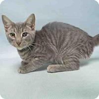 Adopt A Pet :: BARRY BONDS - Brooklyn, NY