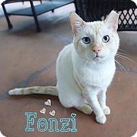 Adopt A Pet :: Fonzi - Tampa, FL