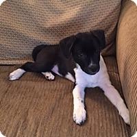 Adopt A Pet :: Lexi - Columbus, IN