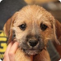 Adopt A Pet :: Lavern - ADOPTED! - Jewett City, CT
