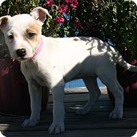 Adopt A Pet :: Vail - Waldorf, MD