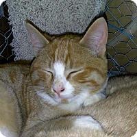 Adopt A Pet :: Sonny - Palo Cedro, CA