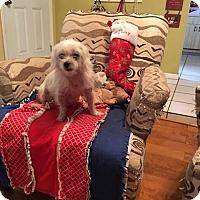 Adopt A Pet :: Daisie - Plant City, FL