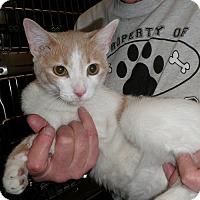 Adopt A Pet :: Kevin - North Wilkesboro, NC