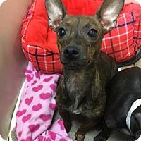 Adopt A Pet :: Diana - Philadelphia, PA
