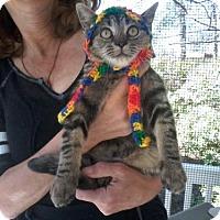 Adopt A Pet :: Carmen - Kinston, NC