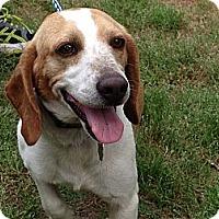 Adopt A Pet :: Tucker - Prairieville, LA