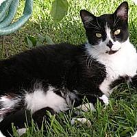 Adopt A Pet :: BoBo - Rohrersville, MD