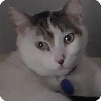 Adopt A Pet :: Mickey - Temecula, CA