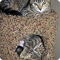 Adopt A Pet :: Ella & Emma - Xenia, OH