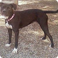 Adopt A Pet :: Tess - Toledo, OH