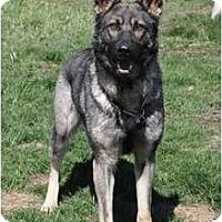 Adopt A Pet :: Zena - Hamilton, MT
