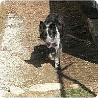 Adopt A Pet :: Wilson - Meridian, ID