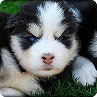 Adopt A Pet :: ARIEL - Torrance, CA