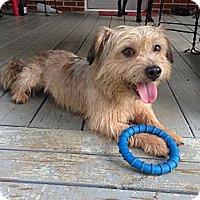 Adopt A Pet :: Ted - Homewood, AL