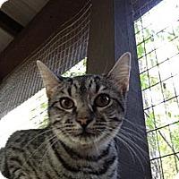 Adopt A Pet :: Tensleigh - Monroe, GA