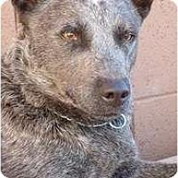 Adopt A Pet :: Diego Adoption Pending - Phoenix, AZ