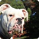 Adopt A Pet :: Kaia