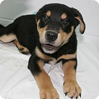 Adopt A Pet :: Jake - Lufkin, TX
