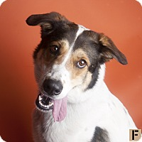 Adopt A Pet :: Pipper - Long Beach, NY
