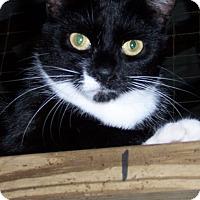 Adopt A Pet :: Snip - Ravenel, SC