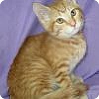 Adopt A Pet :: Langley - Powell, OH
