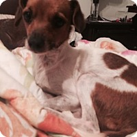 Adopt A Pet :: Cherry in CT - East Hartford, CT