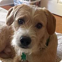 Adopt A Pet :: Strudel - Alpharetta, GA