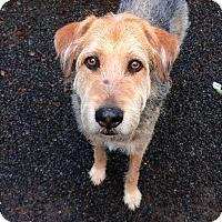 Adopt A Pet :: INU - Tacoma, WA