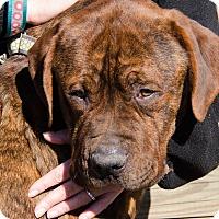 Adopt A Pet :: Elmer - Midlothian, VA