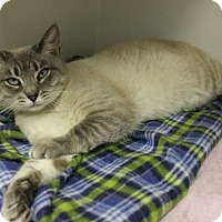 Adopt A Pet :: Libby - Fayetteville, WV