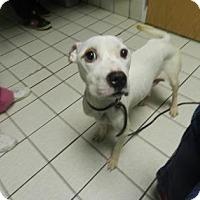 Adopt A Pet :: Kendall Jenner - Jersey City, NJ