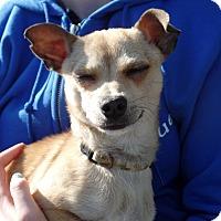 Adopt A Pet :: Peanut - Aurora, IL