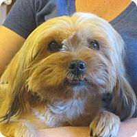 Adopt A Pet :: Selina - Allentown, PA