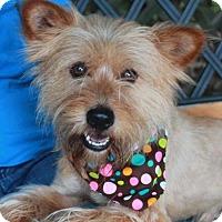 Adopt A Pet :: Leo-PENDING - Garfield Heights, OH