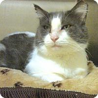 Adopt A Pet :: Gideon - Middletown, CT