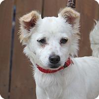 Adopt A Pet :: Hooper - 10 pounds - Los Angeles, CA