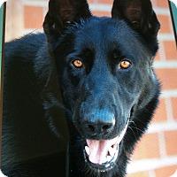 Adopt A Pet :: MESSI VON RAINER - Los Angeles, CA