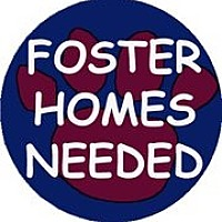 Adopt A Pet :: Foster Homes Needed - San Marcos, CA