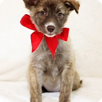Adopt A Pet :: Alice - Dalton, GA