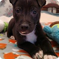 Adopt A Pet :: Tucker - Homewood, AL