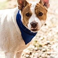 Adopt A Pet :: Galon - Phoenix, AZ