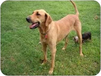 Mable | Adopted Dog | 20077 | Lake Charles, LA | Labrador ...